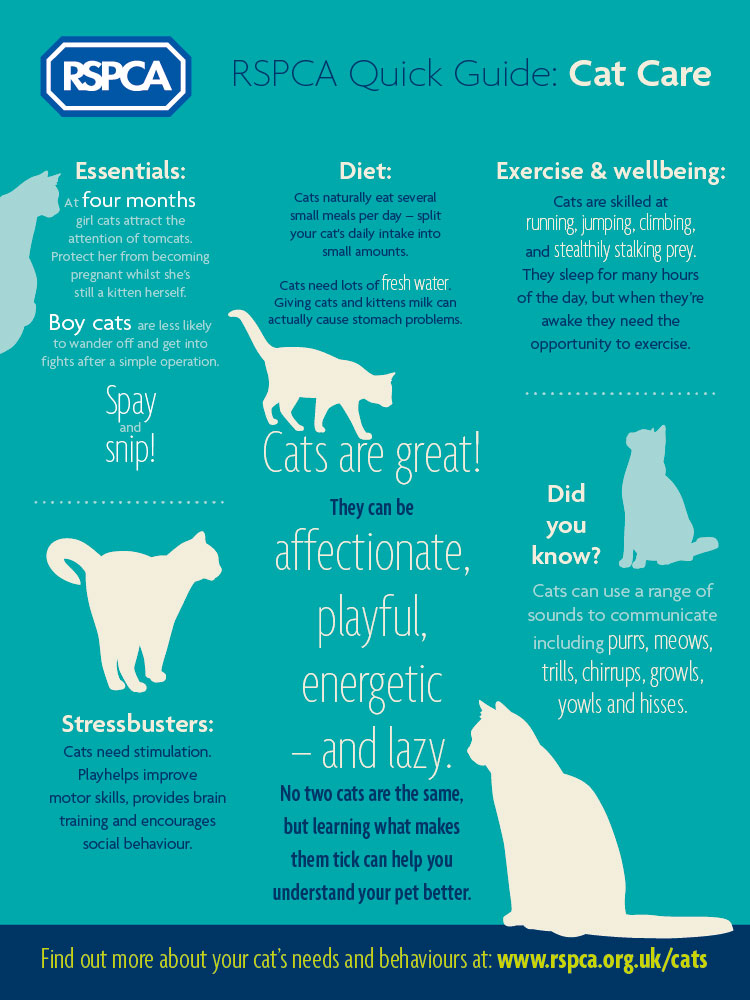 RSPCA-Quick-Guide-CatCare