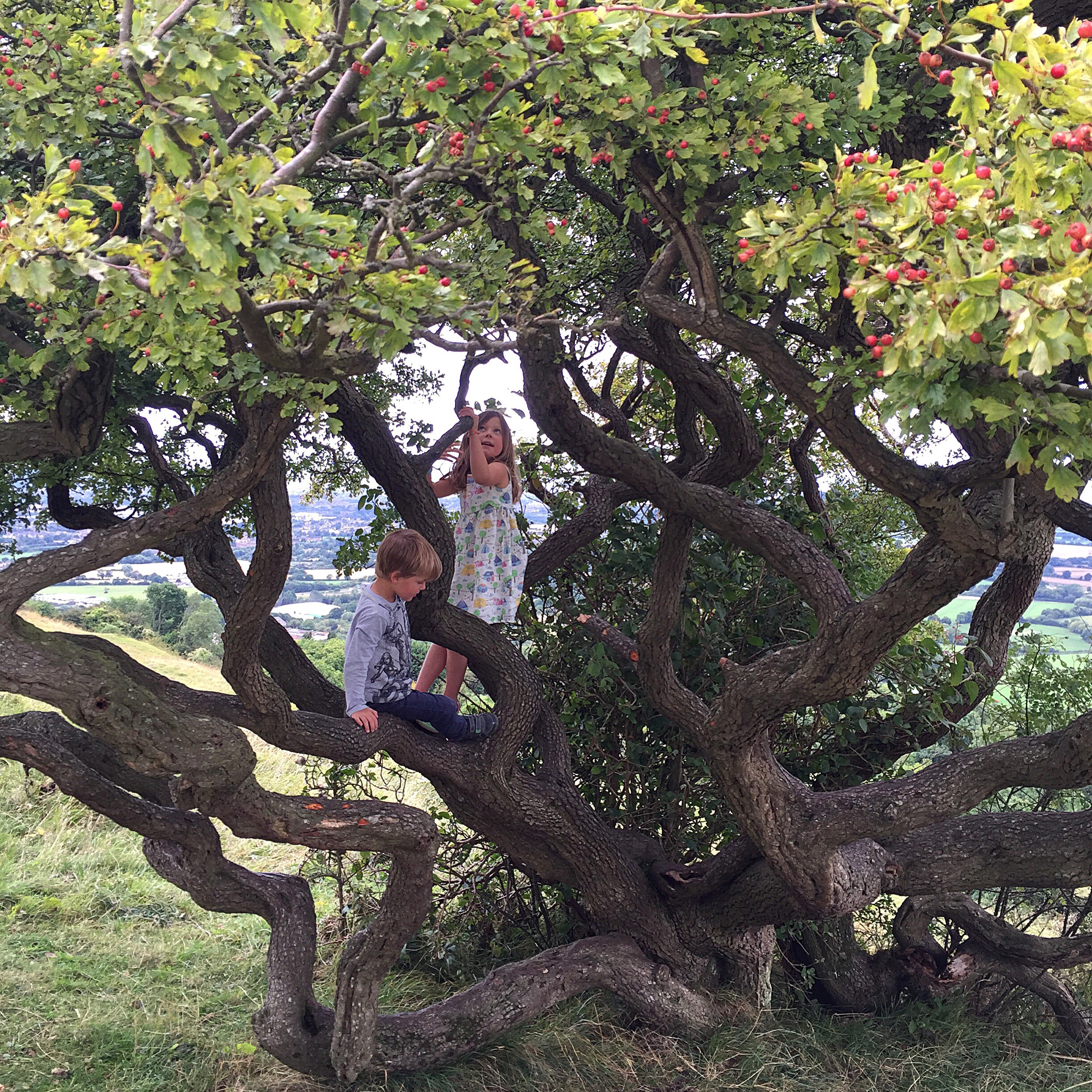 My two children in the branches of a rowan tree.