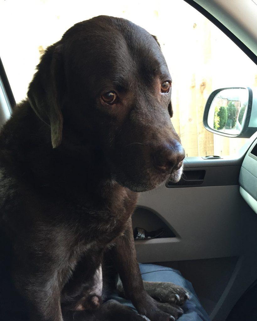Petplan dog insurance