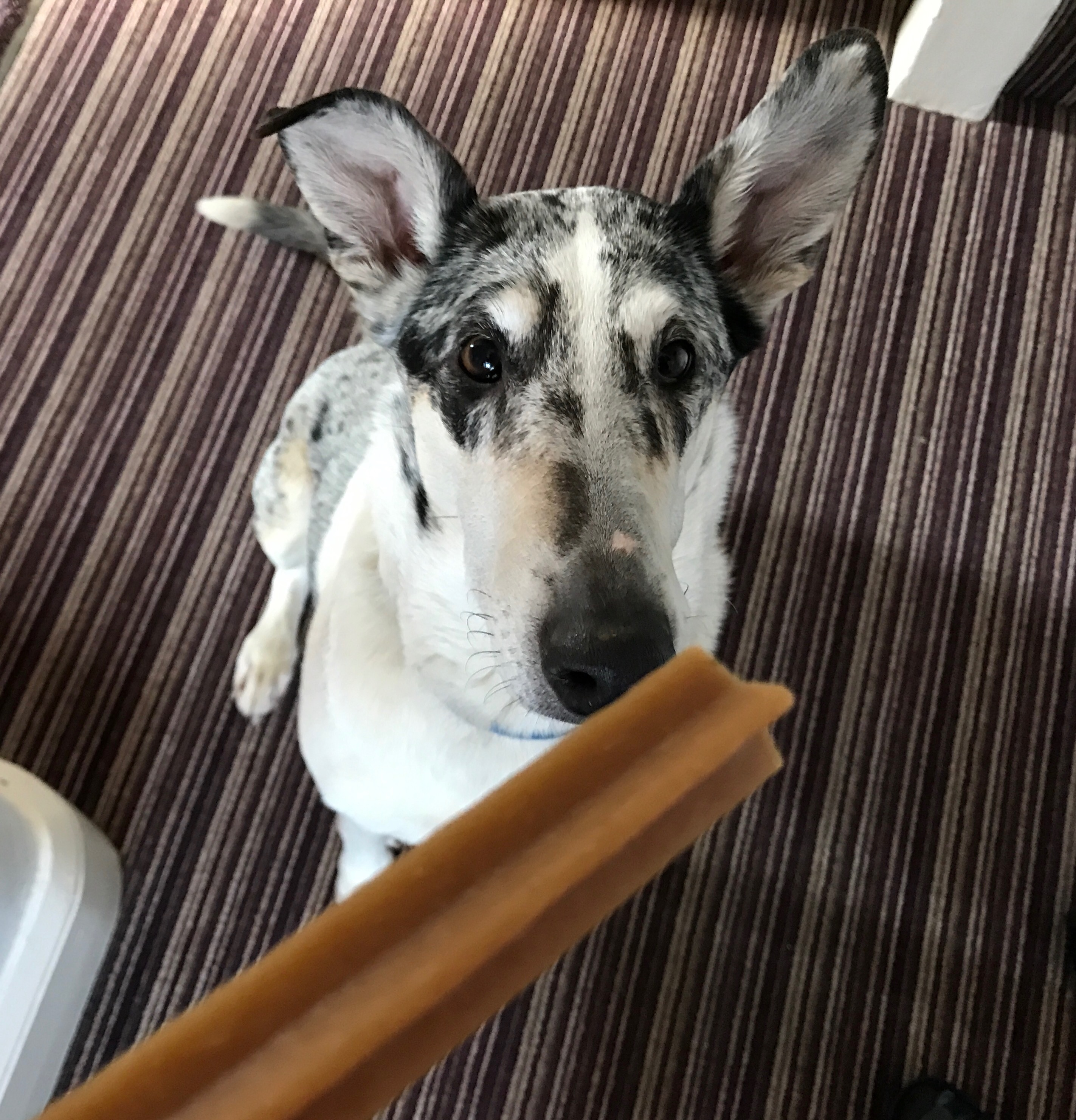 Doggy Dentistry with Pedigree – Fighting Dog Breath!