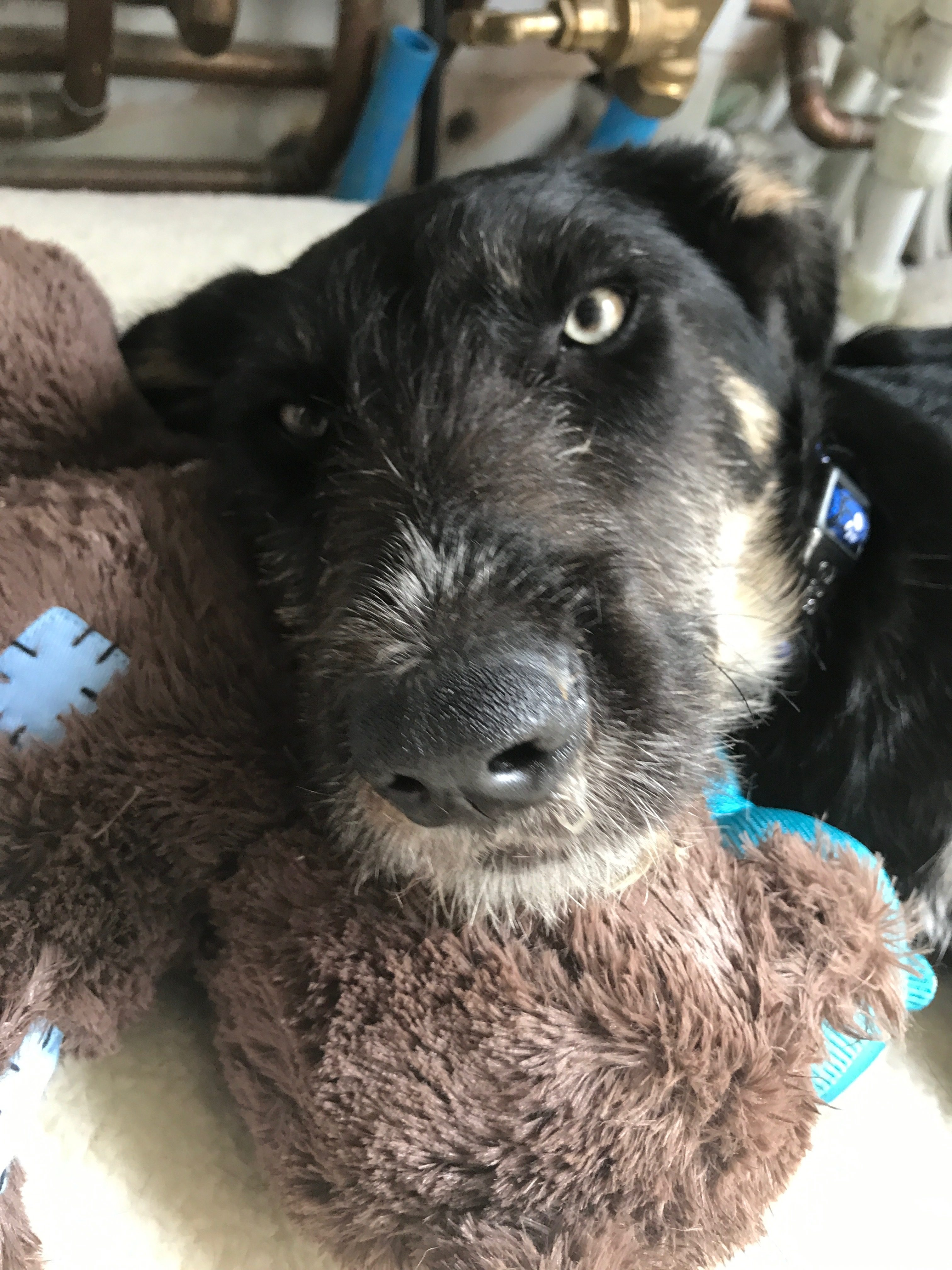 How we ended up with a street dog from Romania. Amicii Dog Rescue