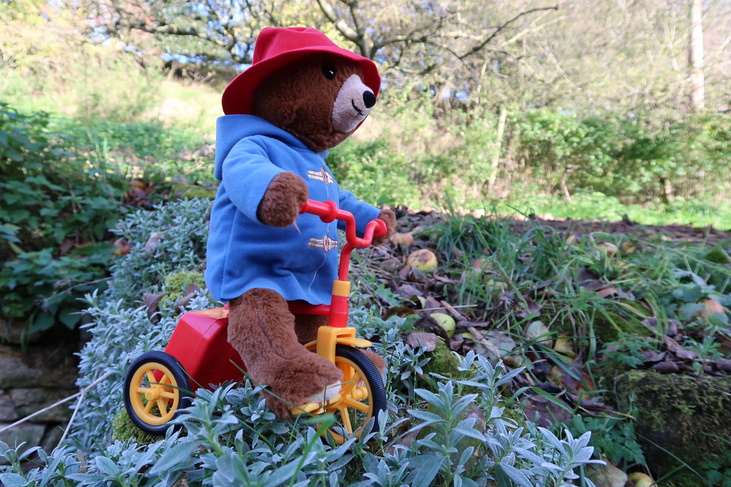 A side view of the Cycling Paddington toy with his little red and yellow tricycle.