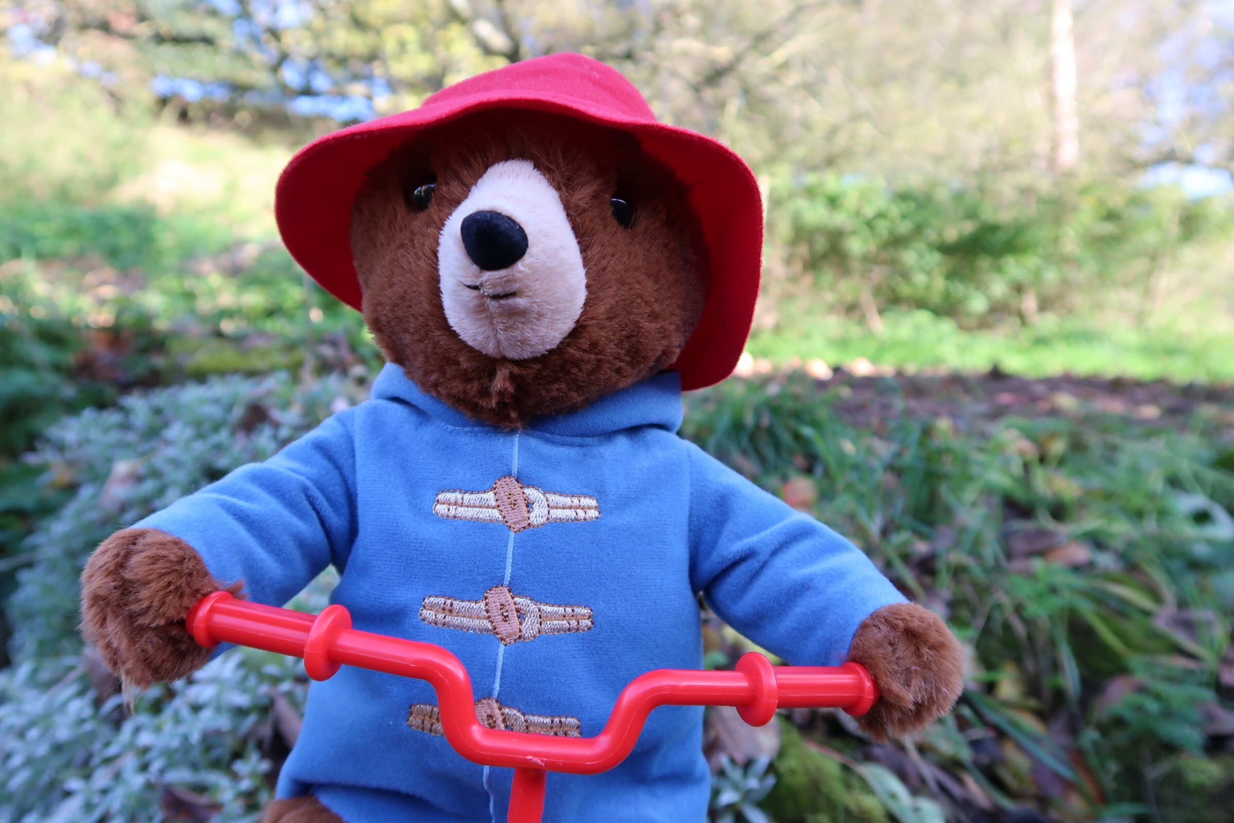 A close up of cycling Paddington with his blue duffel coat and wide brimmed red hat.