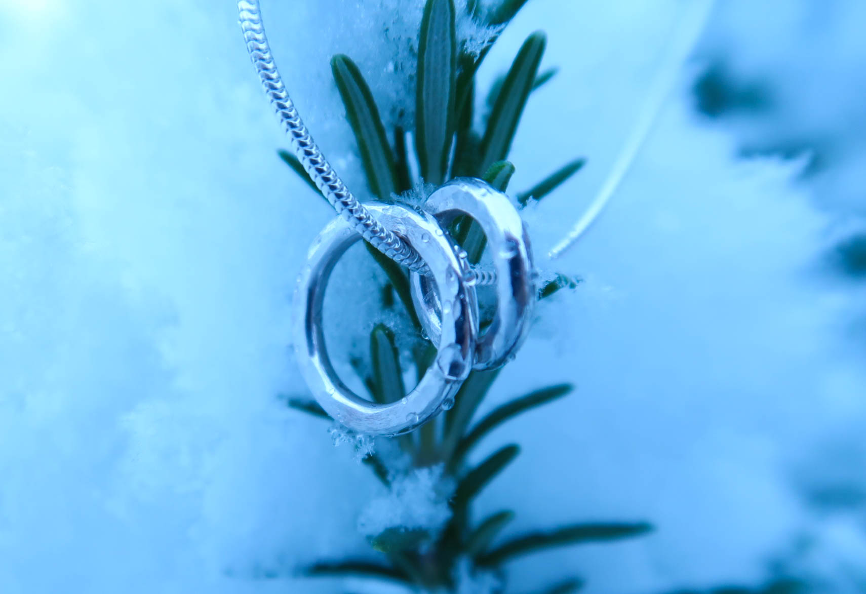 Silver Necklace from Nude Jewellery hanging on a snow covered rosemary branch.