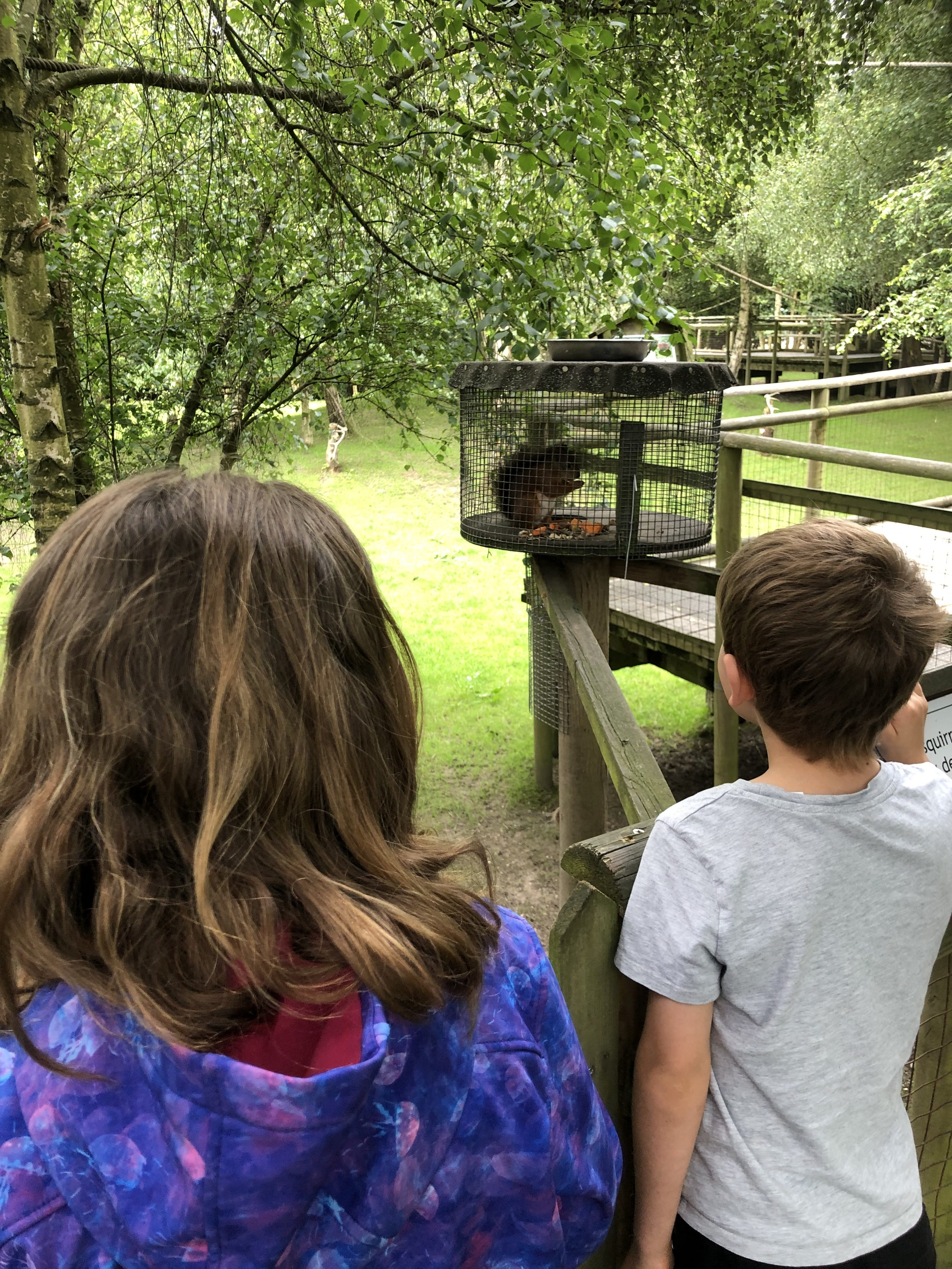 My two children at the British Wildlife Centre watching the red squirrels feeding on their special walk through enclosure.